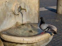 вихрун испытывающий жажду Стоковые Фото