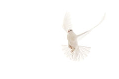 вихрун летания Стоковые Фотографии RF