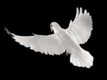 вихрун полета Стоковая Фотография RF