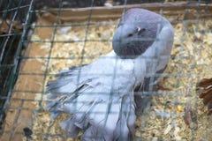 вихрун почты полета поставки несущей Милая птица Естественная предпосылка Стоковое фото RF