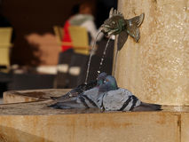 вихрун фонтана Стоковая Фотография