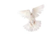 вихрун Стоковая Фотография RF
