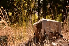 ВИЧ, древесина, cuted древесина, лес стоковая фотография rf