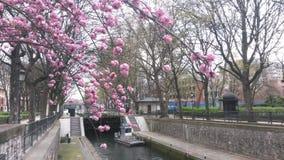 Вишневое дерево на канале St Martin Стоковые Фото