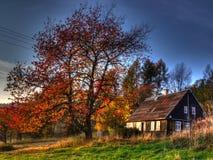Вишневое дерево в осени Стоковое Изображение