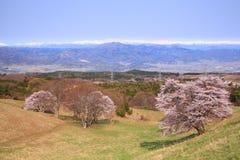 Вишневое дерево и снежная гора Стоковая Фотография RF