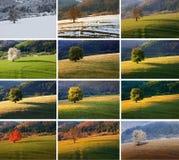 Вишневое дерево 12 месяцев Стоковая Фотография