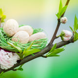 Вишневое дерево с зелеными гнездем и яичками Стоковая Фотография RF