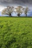Вишневые деревья в цветени Стоковые Изображения