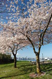 Ванкувер весной Стоковая Фотография RF