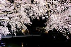 Вишневые деревья осветили вверх вдоль реки Nogawa, Sazumachi, Chofu-shi, токио, Японии весной Стоковые Изображения