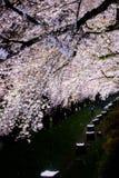 Вишневые деревья осветили вверх вдоль реки Nogawa, Sazumachi, Chofu-shi, токио, Японии весной Стоковое Изображение RF