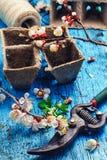 Вишневые цвета в апреле Стоковое Фото