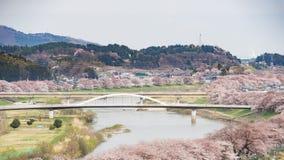 Вишневые цвета или Сакура и река Стоковая Фотография RF
