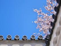 Вишневые цвета на стене замка Himeji в Hyogo, Японии стоковые фотографии rf