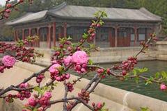 Вишневые цвета Сакура весной, зацветая деревья Стоковое Изображение RF