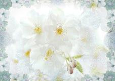 Вишневые цвета с текстурой падения дождя и рамкой цветка Стоковое Фото
