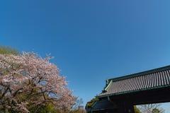 Вишневый цвет во дворце Токио имперском стоковая фотография