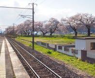 Вишневый цвет в парке Funaoka Joshi в префектуре Miyagi, Японии Стоковые Фотографии RF