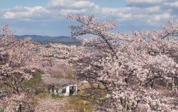 Вишневый цвет в парке Funaoka Joshi в префектуре Miyagi, Японии Стоковая Фотография