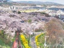 Вишневый цвет в парке Funaoka Joshi в префектуре Miyagi, Японии Стоковое Изображение