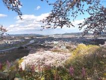 Вишневый цвет в парке Funaoka Joshi в префектуре Miyagi, Японии Стоковое Фото