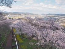 Вишневый цвет в парке Funaoka Joshi в префектуре Miyagi, Японии Стоковые Изображения