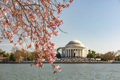 Вишневый цвет в DC Вашингтона - мемориал Томас Jefferson стоковое фото rf