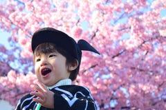 Вишневый цвет и ребенок Стоковое Фото