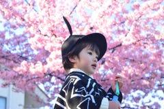 Вишневый цвет и ребенок Стоковые Изображения
