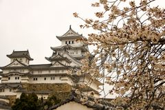 Вишневый цвет на замке Himeji, Японии стоковая фотография rf