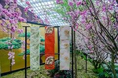 Вишневый цвет на саде заливом Стоковые Изображения