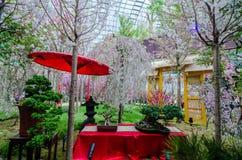 Вишневый цвет на саде заливом Стоковая Фотография