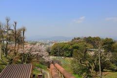 Вишневый цвет на уклоне Keage, Киото в Японии стоковая фотография rf