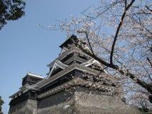 Вишневый цвет перед японским замком Стоковые Фото