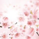 Вишневый цвет, цветки Сакуры 10 eps Стоковые Фото