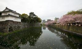 Вишневый цвет Японии (Сакура) Стоковое Изображение RF