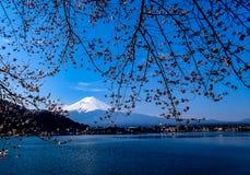 Вишневый цвет Mount Fuji Японии стоковые изображения rf