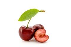 вишни белые Стоковое Изображение RF