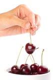 вишни вручают красное зрелое Стоковые Изображения RF
