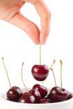 вишни вручают красное зрелое Стоковое фото RF