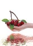 вишни держа женщину Стоковое фото RF