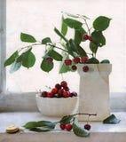 вишни жизни улитки путь сбора винограда все еще Стоковое Изображение RF