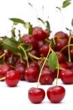 вишни зрелые Стоковое Изображение RF