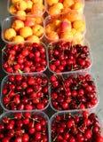 Вишни и оранжевые абрикосы свеже выбрали от деревьев для s стоковое изображение rf