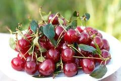 вишни покрывают красный цвет Стоковое фото RF