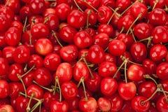 вишни предпосылки зрелые Стоковое Изображение