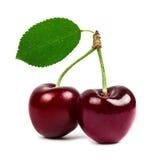 2 вишни при зеленые изолированные лист Стоковые Изображения RF