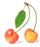 2 вишни при крупный план лист изолированный на белой предпосылке Стоковые Фотографии RF