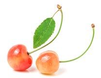 2 вишни при крупный план лист изолированный на белой предпосылке Стоковое фото RF